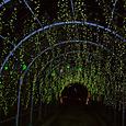 きばな藤のトンネル