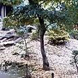 011旧古河庭園
