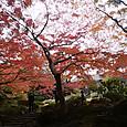 014旧古河庭園