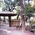 026旧古河庭園