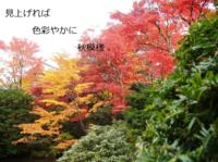 2010_1108_144134dscf0015