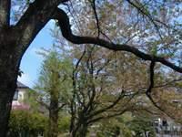 2011_0419_142005dscf0064